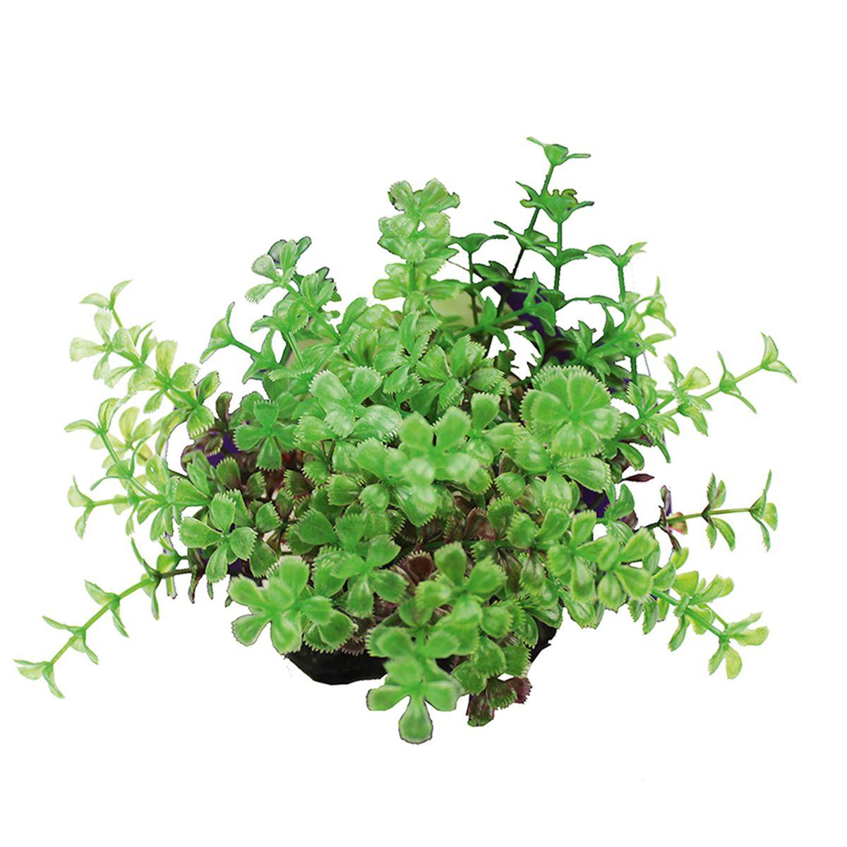 Растение для аквариума ArtUniq Прозерпинака красно-зеленая, высота 10-12 смART-1192111Композиция из искусственных растений ArtUniq превосходно украсит и оживит аквариум.Растения - это важная часть любой композиции, они помогут вдохнуть жизнь в ландшафт любого аквариума или террариума. А их сходствос природными порадует даже самых взыскательных ценителей.