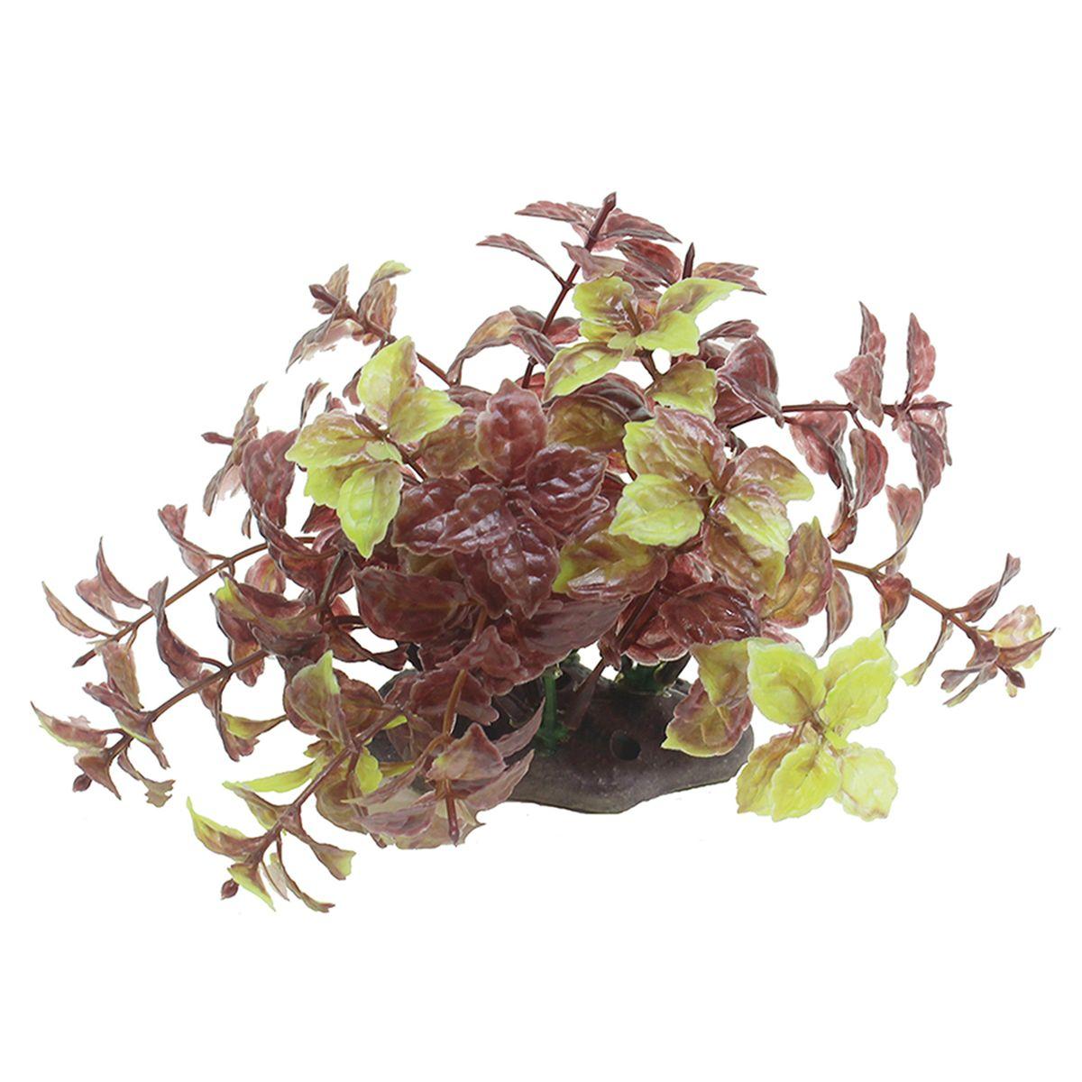 Растение для аквариума ArtUniq Хемиграфис, высота 10-12 см0120710Растение для аквариума ArtUniq Хемиграфис, высота 10-12 см