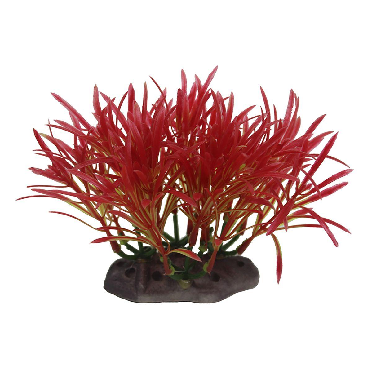 Растение для аквариума ArtUniq Аммания изящная, высота 10-12 см0120710Композиция из искусственных растений ArtUniq превосходно украсит и оживит аквариум.Растения - это важная часть любой композиции, они помогут вдохнуть жизнь в ландшафт любого аквариума или террариума. А их сходствос природными порадует даже самых взыскательных ценителей.