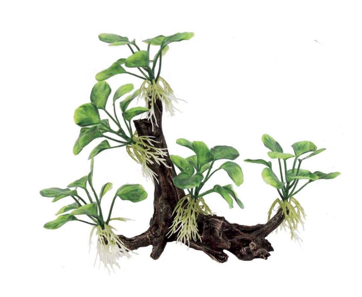 Декорация для аквариума ArtUniq Ветвистая коряга с анубиасом нана, 22 x 9 x 20 см декорация для аквариума artuniq пористый камень 20 5 x 10 5 x 18 8 см