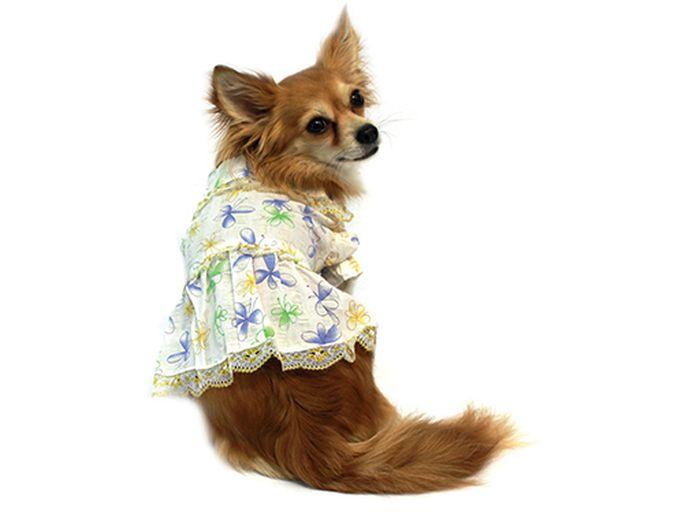 Платье для собак Каскад Цветы, цвет: белый, синий, золотой. Размер L0120710Платье для собак Каскад отлично подойдет для прогулок или для дома. Платье имеет короткие рукава, которые не ограничивают свободу движений, поэтому собачка будет чувствовать себя в нем комфортно. Модель украшена цветочным принтом и дополнена кружевной тесьмой. Модное и удобное платье согреет вашего питомца во время прогулок и защитит от пыли и насекомых.Длина по спинке: 30 см.