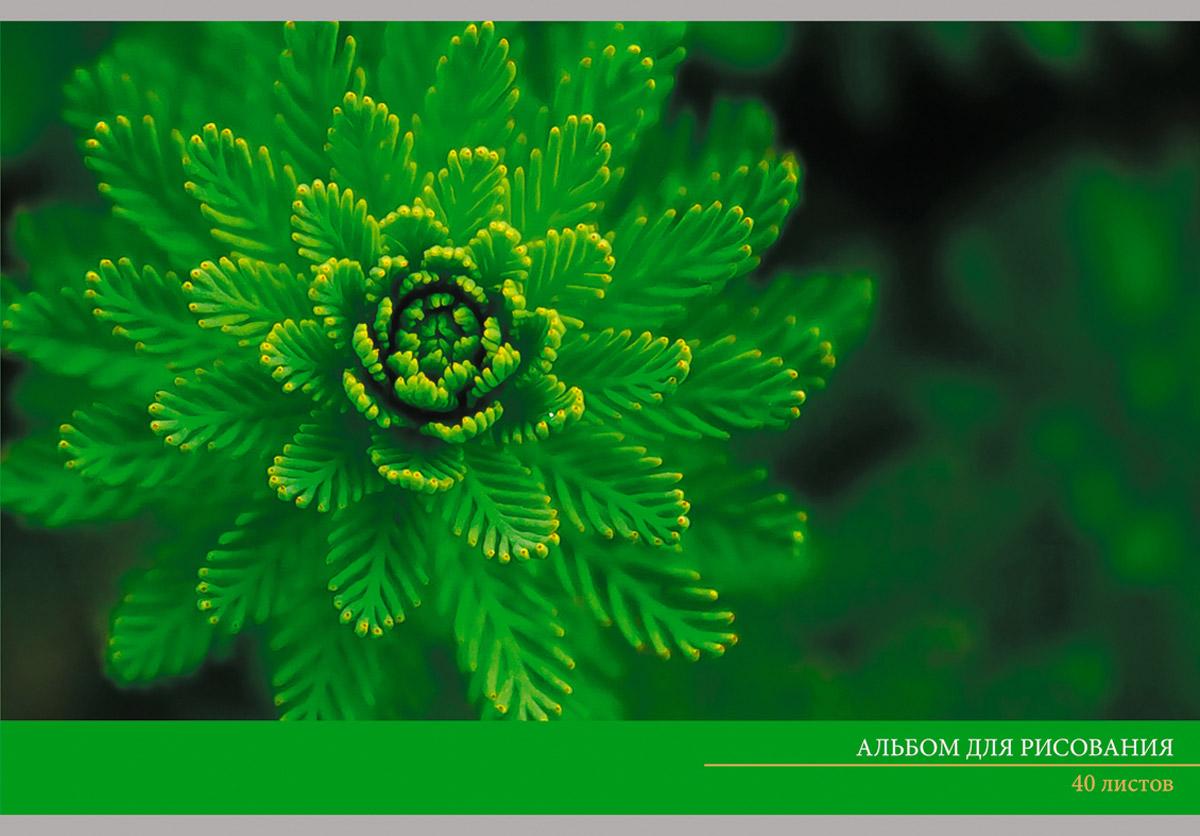 Канц-Эксмо Альбом для рисования Зеленый мир 40 листов0703415Альбом для рисования 40 листов на скрепке. Обложка из мелованного картона с выборочным лаком. Бумага офсет 110г/м2.