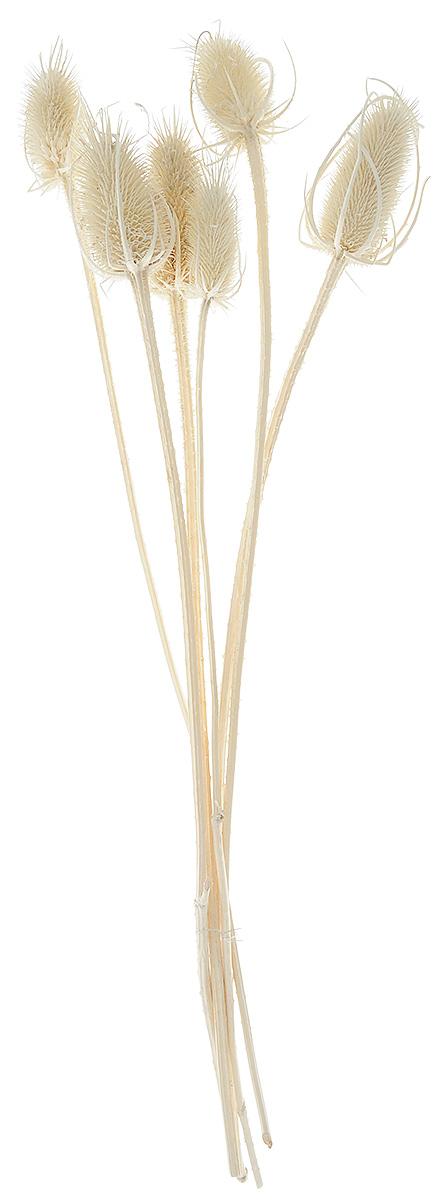 Украшение декоративное Lovemark Эхинопс, цвет: бежевый, 6 штNLED-454-9W-BKУкрашение декоративное Эхинопс - великолепный подарок себе и вашим близким. Этот очаровательный предмет интерьера будет приковывать взгляды ваших гостей.Изделия из соломки несут в себе энергию солнечных лучей. Несмотря на свой хрупкий вид, солома является прочным и долговечным материалом, а значит не помнется и не поломается со временем. Рекомендации по уходу: изделие должно находиться в сухом помещении.