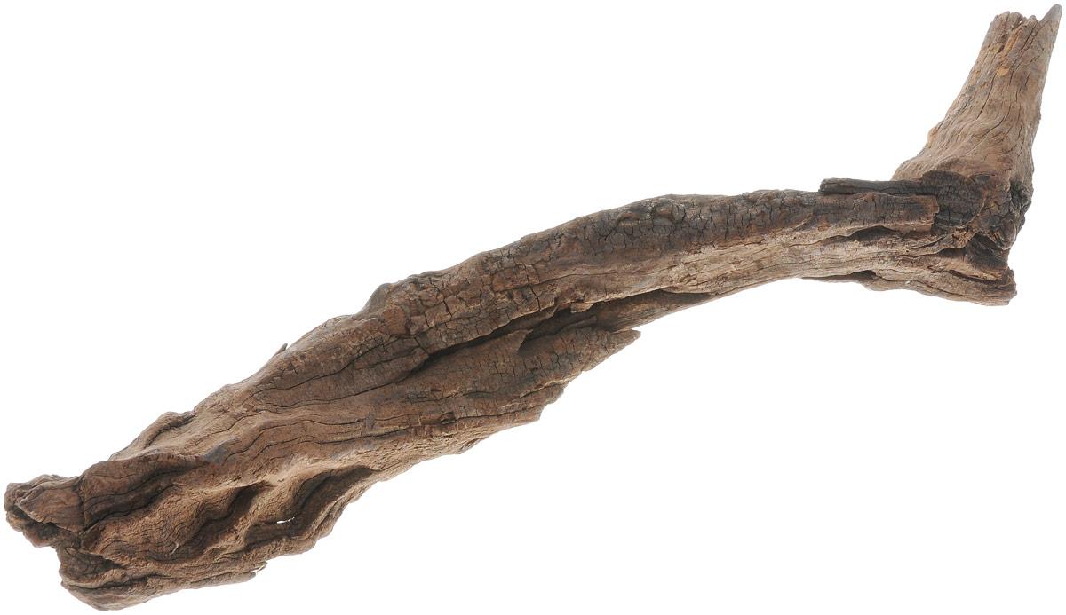 Декорация для аквариума UDeco Коряга китайская. Размер XS0120710Декорация UDeco Коряга китайская станет прекрасным украшением вашего аквариума. Изделие изготовлено из натурального дерева. Декорация будет служить превосходным укрытием для небольших рыб, мальков и креветок. Отлично подходит для кольчужных сомов. В аквариуме коряга может потемнеть и немного окрасить воду. Для утяжеления коряги и предотвращения окрашивания рекомендуется предварительно замочить её в воде на несколько дней.Вес декорации: 200-500 г.Размер декорации: 15-40 см.Возможны незначительные отклонения размера и веса от указанных.