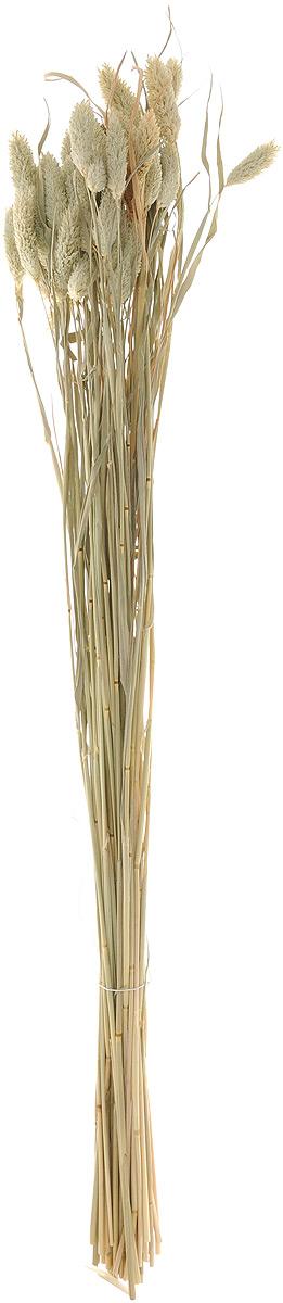 Украшение декоративное Lovemark Пучок. Фалярис, цвет: бежевый, длина 77 смN181318_красный, белый, зеленыйКаждое время года по-своему прекрасно. Однако, как часто поздней осенью и долгой зимой нам не хватает тепла, ярких весенних красок, которые дарят цветы. Этот недостаток можно восполнить благодаря композициям из сухоцветов.Букет из сухих цветов способен сохранять свою красоту на протяжении всего года, а уход за ним минимален. Очень удобны сухоцветы и для использования их людьми с повышенной аллергической реакцией на пыльцу растений и различные резкие запахи. Подчеркните свой неповторимый вкус в интерьере с помощью нежной композиции из сухих цветов. Длина украшения: 77 см.