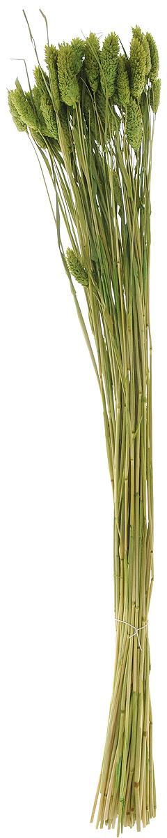 Украшение декоративное Lovemark Пучок. Фалярис, цвет: зеленый, длина 77 см44158Каждое время года по-своему прекрасно. Однако, как часто поздней осенью и долгой зимой нам не хватает тепла, ярких весенних красок, которые дарят цветы. Этот недостаток можно восполнить благодаря композициям из сухоцветов.Букет из сухих цветов способен сохранять свою красоту на протяжении всего года, а уход за ним минимален. Очень удобны сухоцветы и для использования их людьми с повышенной аллергической реакцией на пыльцу растений и различные резкие запахи. Подчеркните свой неповторимый вкус в интерьере с помощью нежной композиции из сухих цветов. Длина украшения: 77 см.
