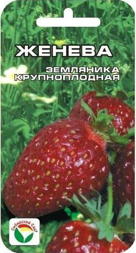Семена Сибирский сад Клубника. Женева, 10 штCLP446Сорт Женева завезен в Россию с начала 90-х годов. Отличается интенсивным ростом. Куст приземистый, плодоносит дважды в сезон, с ярко выраженным периодом покоя (почти три недели). На усах текущего года цветение и плодоношение наступает на стадии формирования семи листьев, поэтому плантация с этим сортом дает урожай постоянно. Ягода крупная, плотная. Плодоножка не поднимается, лежит, вынося гроздья с ягодами за пределы куста в разные стороны. В неблагоприятную весну, в случае большого числа пасмурных дней, во второй половине лета сорт способен компенсировать этот недостаток и одарить урожаем независимо от количества солнечных дней.Внимание! Семена клубники туговсхожие! Необходимо строго соблюдать посевной режим! Всходы чаще всего появляются неравномерно в течение 30-40 дней (до 60 дней).Сеять семена на рассаду можно в различное время года, однако лучшее время для посева - зима (конец января - март). Подготовка почвенной смеси заключается в следующем: 3 части песка перемешивают с 5 частями рассыпчатого перегноя и прогревают в духовом шкафу 3-4 часа при температуре 90-100°С. Семена аккуратно раскладывают на поверхности слегка уплотненного и увлажненного грунта, накрывают слоем снега толщиной 5 см, сверху горшочки закрывают пленкой для предотвращения пересыхания почвы. На 3-5 дней посевные горшочки ставят в холодное место (температура 0...+5°C), затем для прорастания семена держат при постоянной температуре +22°С, не допуская пересыхания почвы.В фазе 1 -2 настоящих листьев сеянцы пикируют в горшочки и снижают температуру до +14...+16°С. Пересадку в грунт производят после появления 6-го настоящего листа.