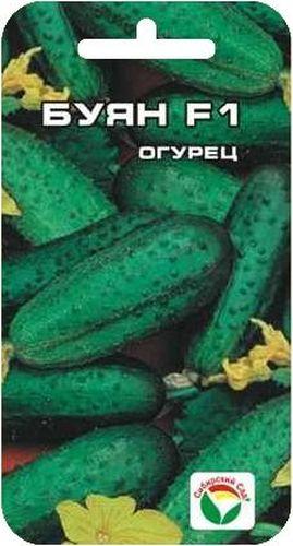 Семена Сибирский сад Огурец. Буян, 7 штBH-SI0439-WWПопулярный скороспелый партенокарпический гибрид корнишонного типа с пучковым расположением завязей (в узлах формируется от 2 до 5-7 завязей). Зеленцы ярко-зеленые. с частым опушением, маленькие, длиной 8-11 см. Не перерастают. Замечательно подходят для засолки и консервирования. Гибрид характеризуется ценным признаком - сначала боковые побеги растут медленно, а после сбора большей части урожая с основного стебля ускоряют свой рост. Таким образом, значительно экономится время на прищипку побегов.Гибрид возделывается в теплицах, тоннелях, открытом грунте. Положительно реагирует на доопыление - повышается ранний и общий урожай. Гибрид устойчив к мучнистой росе, оливковой пятнистости, ВОМ-1, толерантен к ложной мучнистой росе.Посев на глубину 1,5-2 см. Оптимальная температура почвы для прорастания семян 23-25 С. Плотность посадки 3 растения на 1 м2. Растение укрывают плёнкой, подвязывают к шпалере. Полив и подкормка органическими минеральными удобрениями в процессе вегетации. Сбор урожая через каждые 3-5 дней.Для ускорения процесса всхожести семян, оздоровления растений, улучшения завязываемости плодов рекомендуется пользоваться специально разработанными стимуляторами роста и развития растений.