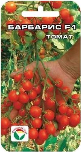 Семена Сибирский сад Томат. Барбарис, 15 штBP-00000440Вишневовидный (черри) гибрид раннего срока созревания. Очень понравится любителям оригинальных, необычных томатов. Растение индетерминантное, высотой до 2 метров, формирует от трех до пяти мощных кистей с огромным количеством (до 100 шт) вишневовидных мелких плодов массой 10-12 г. Томаты очень сладкие (содержание сахаров до 8%), при этом плотные и мясистые. Пригодны для употребления в свежем виде, украшения блюд, цельноплодного консервирования. Куст необыкновенно декоративен, сделает вашу теплицу красивой и нарядной. Гибрид рекомендуется для выращивания в защищенном грунте. Посев на рассаду производят за 50-60 дней до высадки растений на постоянное место. Оптимальная постоянная температура прорастания семян 23-25°С. При высадке в грунт на 1 м2 размещают 3-4 растения. Сорт хорошо реагирует на полив и подкормки комплексными минеральными удобрениями. Выращивается в один стебель с подвязкой и пасынкованием. Для ускорения процесса всхожести семян, оздоровления растений, улучшения завязываемости плодов рекомендуется пользоваться специально разработанными стимуляторами роста и развития растений.