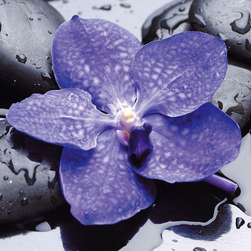 """Картина на стекле Postermarket """"Синий цветок"""", 30 х 30 см, Постермаркет / Postermarket"""