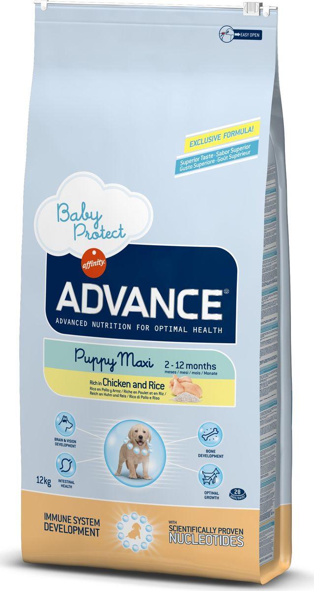 Корм сухой Advance Baby Protect Maxi для щенков крупных пород, от 2 до 12 месяцев, 12 кг0120710Advance - высококачественный корм супер-премиум класса испанской компании Affinity Petcare, которая занимает лидирующие места на европейском и мировом рынках. Корм разработан с учетом всех особенностей развития и жизнедеятельности собак и кошек. В линейке кормов Advance любой хозяин может подобрать необходимое питание в соответствии с возрастом и уникальными особенностями своего животного, а также в случае назначения специалистами ветеринарной диеты. Affinity Petcare имеет собственную лабораторию, а также сотрудничает с множеством международных исследовательских центров, благодаря чему специалисты постоянно совершенствуют рецептуру и полезные свойства своих кормов. В составе главным источником белка является СВЕЖЕЕ мясо, благодаря которому корм обладает высокими вкусовыми качествами, а также высокой питательной ценностью. Корм сухой Advance Baby Protect Maxi содержит эксклюзивную формулу, содержащую нуклеотиды, которая помогает повысить эффективность репликации клеток и обеспечивает оптимальное развитие тканей растущих щенков. Ускоренный эффект репликации клеток позволяет активизировать иммунную систему, усиливая защитный барьер организма против бактерий, вирусов и других патогенов. Корм с содержанием пребиотиков, пробиотиков и иммуноглобулинов для правильного развития и защиты желудочно-кишечного тракта.Состав: курица (16%), рис (15%), дегидрированное мясо курицы, мука из маиса, пшеница, маис, животный жир, гидролизованный белок животного происхождения, свекольный жом, дрожжи, яичный порошок, гидролизованное масло подсолнечника, рыбий жир, плазменный протеин, овсяные волокна, хлористый калий, соль, трикальцийфосфат, нуклеотиды, глюкозамин, хондроитинсульфат.Анализ: протеин 30%, жиры 17%, сырые волокна 3%, неорганическое вещество 6,5%, кальций 1,1%, фосфор 0,9%, влажность 9%.Энергетическая ценность 3755 ккал/кг. Товар сертифицирован.