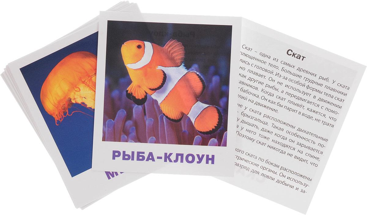 Айрис-пресс Обучающие карточки Обитатели морей и океанов