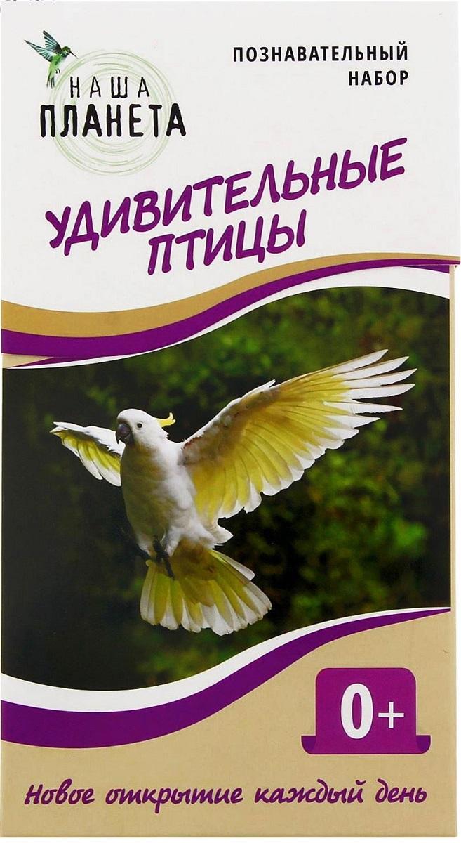 Лас Играс Обучающая игра Удивительные птицы