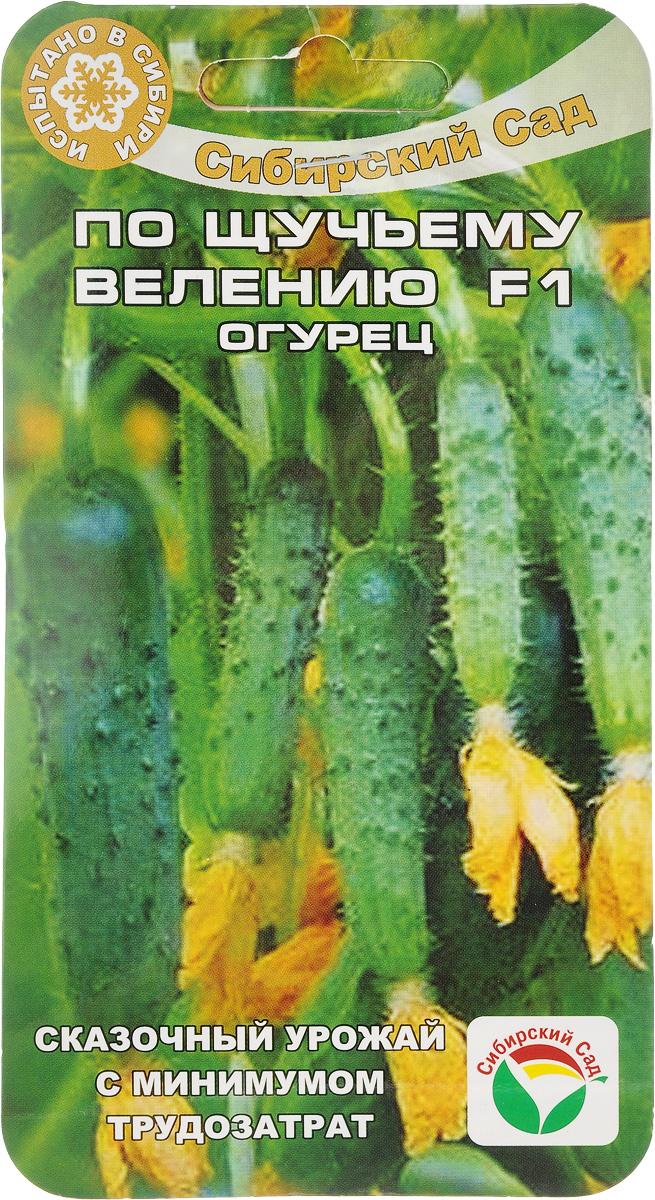 Семена Сибирский сад Огурец. По щучьему велению F1, 10 штBH-SI0439-WWОгурец Сибирский сад По Щучьему Велению F1 - среднеранний (50-52 дня) партенокарпический гибридженского типа цветения, не требующий опыления. Способен одарить сказочными урожаями при минимальных трудозатратах. Важная особенность сорта - компактный куст, не нуждающийся в формировании (прищепке) + длительный (до наступления заморозков) период плодоношения.Растения одностебельное, не требует формирования, с пучковым образованием связей. Зеленец цилиндрический, крупнобугорчатый, темно-зеленый, длиной 10-12 см, массой 100-120 г. Назначение универсальное. Ценность гибрида: высокая урожайность, холодостойкость, длительный период плодоношения, отличные вкусовые качества, устойчивость к болезням. Предназначен для выращивания под пленочными укрытиями.Для получения второго урожая, начиная с августа, провести 2-3 внекорневых подкормки комплексными минеральными удобрениями.В комплект входят 10 семечек огурцов.
