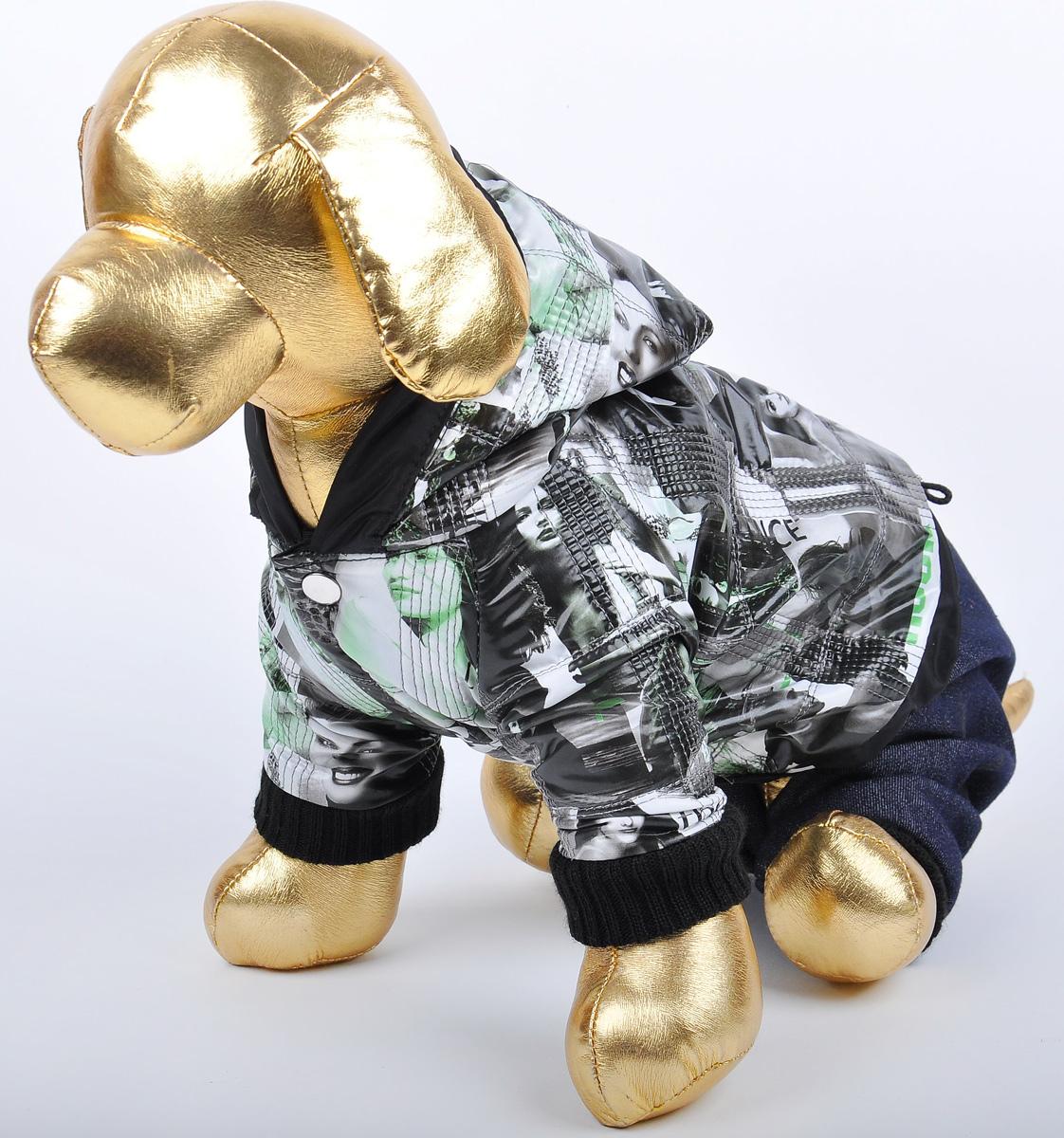 Куртка со штанами для собак GLG Столица. Размер L0120710Куртка с джинсовыми штанами для собак столица, материал куртка болонья, штаны джинса х/б, размер-L, длина спины27-29см, объем груди-37-39см.