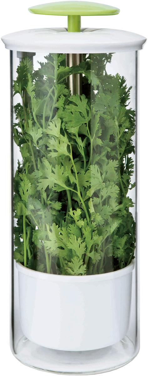 Контейнер для хранения зелени SinoGlass, 14 х 14 х 31FA-5125 WhiteКонтейнер для хранения зелени SinoGlass изготовлен из качественного ударопрочного стекла и экологически чистого пластика. Контейнер состоит из держателя и емкости для воды. В емкость для воды необходимо налить питьевую воду, поместить зелень в держатель так, чтобы обрезанные края зелени опустились в воду, и поставить контейнер в холодильник. В таком виде зелень дольше сохранит свежесть и приятный внешний вид. Размеры: 14 х 14 х 31 см.