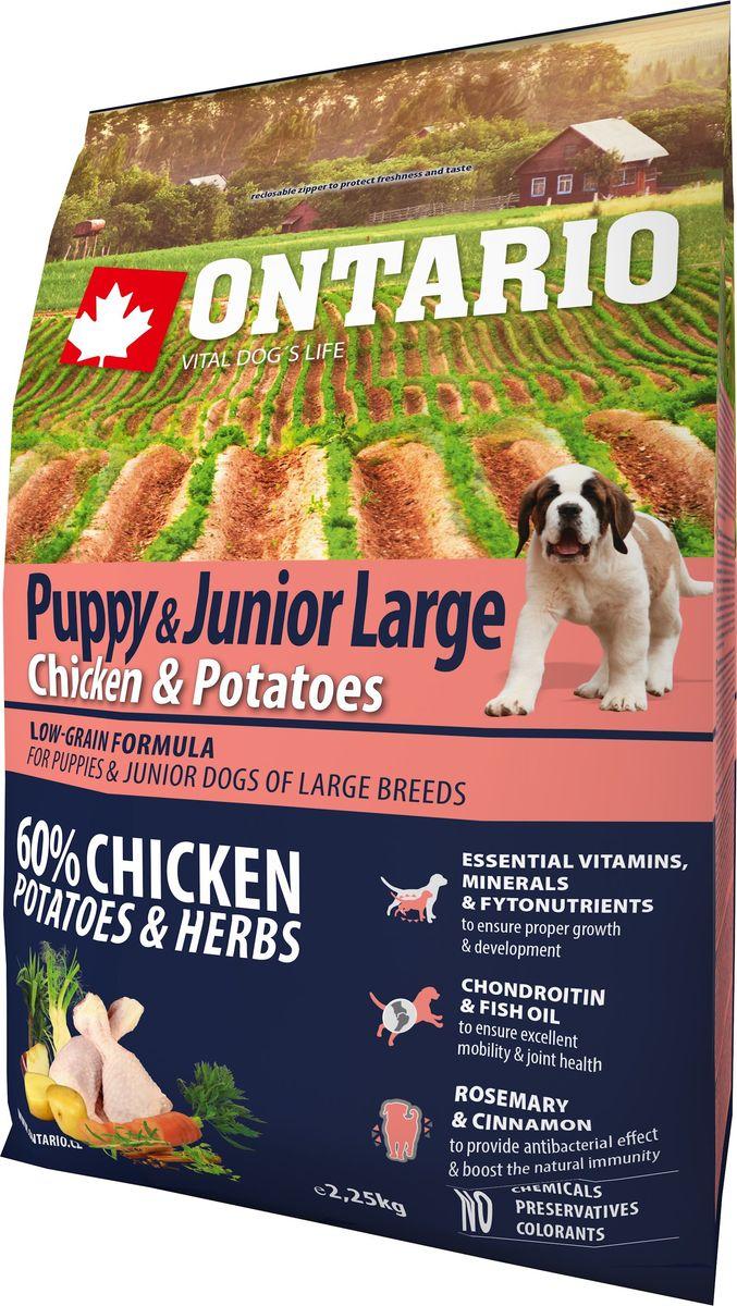 Корм сухой Ontario Puppy & Junior Large, для щенков крупных пород, с курицей и картофелем, 2,25 кг0120710Формула с низким содержанием зерновых для щенков и молодых собак крупных пород (1-24 месяцев). Полноценный корм супер-премиум класса для собак.Сбалансированный состав для здорового функционирования и развития всего организма. Для собак крупных пород особенно важно здоровье опорно-двигательного аппарата, поэтому корм обогащен хондроитином и рыбьим жиром для поддержания превосходной подвижности и здоровья суставов.Корм содержит широкий набор витаминов и минералов, способствующих здоровому росту и развитию щенков. Высокое содержание белка имеет важное значение для правильного формирования мышечной ткани. Пивные дрожжи содержат витамины группы В и ферменты, способствуют росту полезных бактерий в кишечнике. Дрожжи улучшают состояние кожи и шерсти животных.Лососевый жир богат незаменимыми жирными кислотами Омега 3, оказывающими благотворное влияние на все органы и системы организма, особенно на шерсть животных. Омега 3 и Омега 6 жирные кислоты являются важными компонентами для поддержки функций сердца. Яблоки богаты клетчаткой (пектином), способствующей пищеварению и выводящей токсины из кишечника, а также являются источником витаминов и антиоксидантов.Специальная смесь трав и специй, особенно аниса, гвоздики и морских водорослей, способствует поддержанию гигиены полости рта и здоровья зубов.Маннанолигосахариды естественным образом поддерживают работу кишечника и улучшают общее состояние здоровья животных.Рекомендации по кормлению: Давать ком сухим или слегка увлажненным. Всегда обеспечивайте собаке доступ к свежей воде. Количество корма, ежедневно необходимое собаке, зависит от окружающих условий, размера, возраста и уровня активности. Рекомендуемая дневная норма приведена в таблице. Для поддержания надлежащего состояния, следите, чтобы ваша собака была физически активна и не перекармливайте ее.Состав: дегидрированная курица (32%), картофельные хлопья (22%), рис, суше
