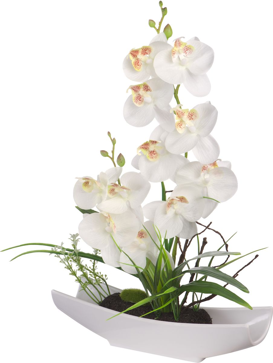 Цветы декоративные Engard Орхидея, в ладье, цвет: белый, 29 х 7 х 32 см1092019Цветочные композиции Engard - это уникальное дизайнерское решение для создания природного колорита и гармонии в пространстве. Изящная орхидея в белой ладье высотой 32 см выполнена аккуратно и очень натурально из высококачественного материала R-touch. Не требует постоянного ухода.