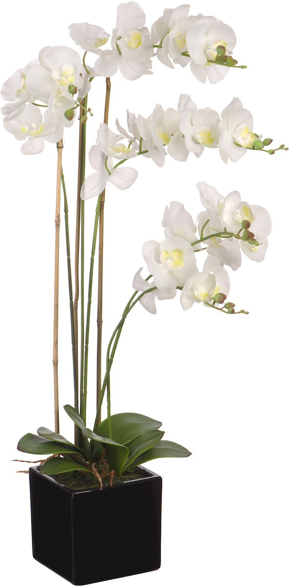Цветы декоративные Engard Орхидея, в цветочном горшке, 15 х 15 х 84 см97775318Искусственные цветы Engard - это популярное дизайнерское решение для создания природного колорита и гармонии в пространстве. Изящная белая орхидея высотой 80 см выполнена аккуратно и очень натурально из высококачественного материала R-touch. Не требует постоянного ухода.