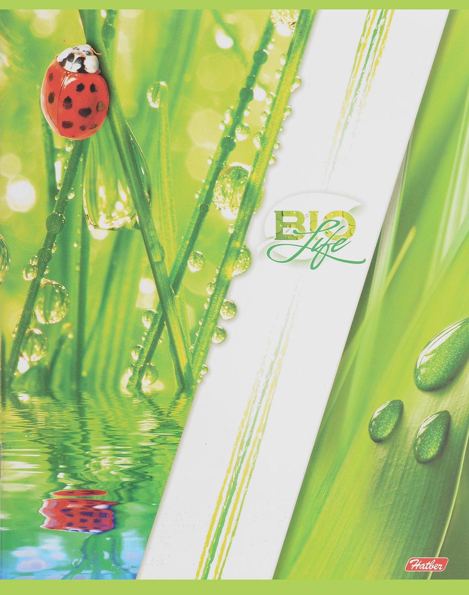 Тетрадь Hatber Bio Life отлично подойдет для занятий как школьнику, так и студенту.  Яркая обложка бело-зеленого цвета с изображением божьих коровок, выполненная из плотного мелованного картона, позволит сохранить тетрадь в аккуратном состоянии на протяжении всего времени использования.  Внутренний блок тетради, соединенный скрепками, состоит из 96 листов белой бумаги в голубую клетку с полями.