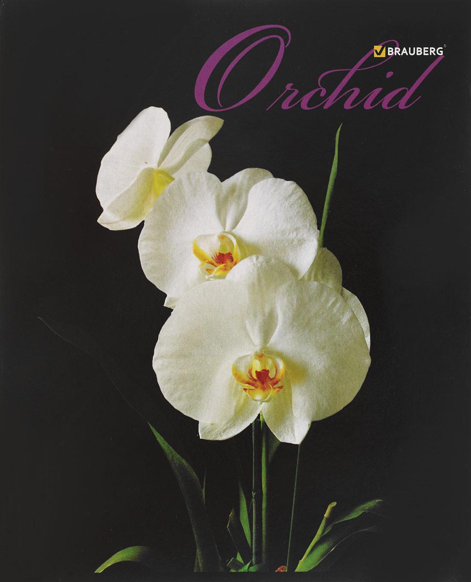 Brauberg Тетрадь Орхидеи 48 листов в клетку цвет белый72523WDТетрадь Brauberg Орхидеи на металлических скрепках пригодится как школьнику, так и студенту.Обложка изготовлена из плотного картона. Внутренний блок выполнен из белой бумаги в стандартную клетку с полями. Тетрадь содержит 48 листов.