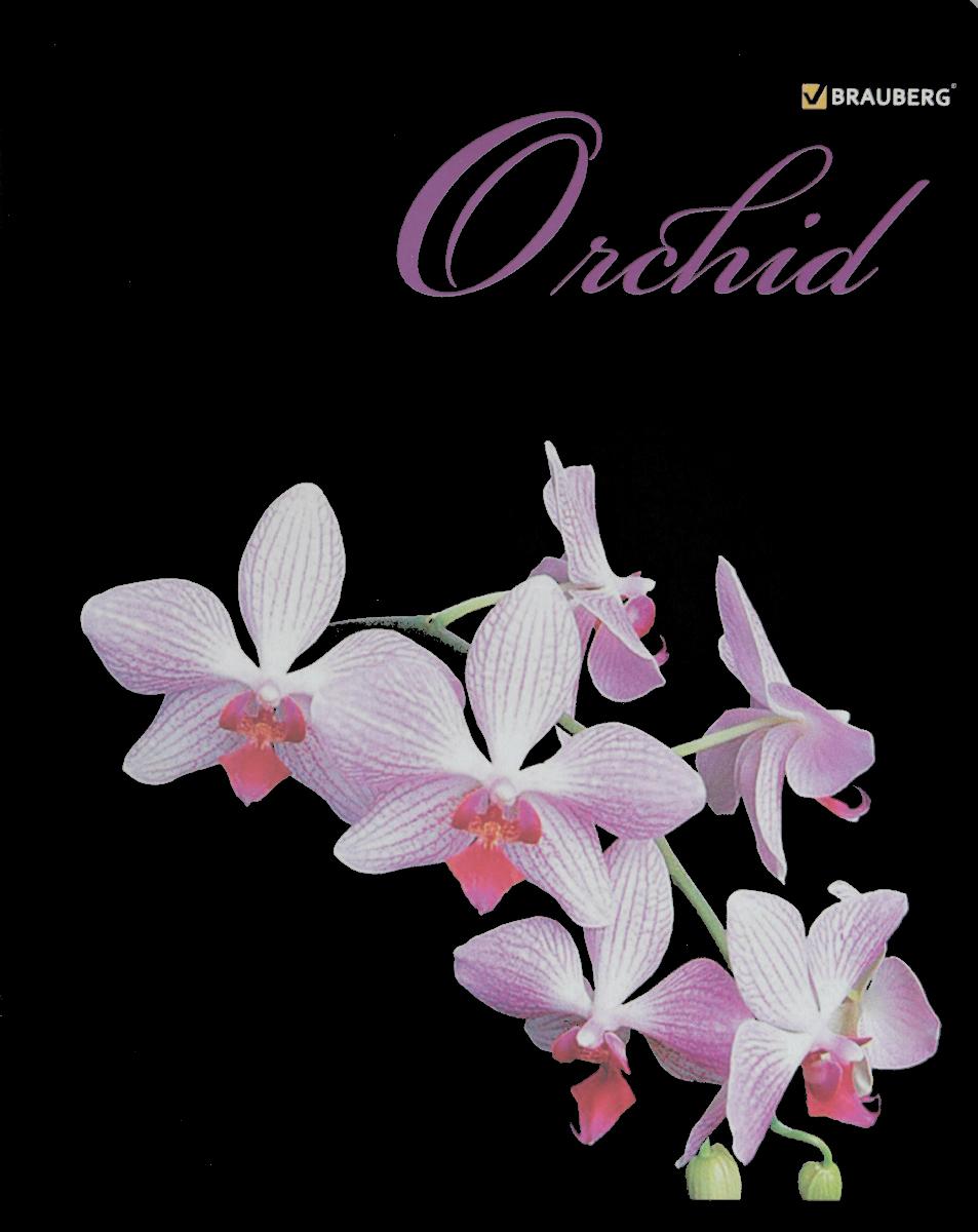 Brauberg Тетрадь Орхидеи 48 листов в клетку цвет фиолетовый07279/650785Тетрадь Brauberg Орхидеи на металлических скрепках пригодится как школьнику, так и студенту.Обложка изготовлена из плотного картона. Внутренний блок выполнен из белой бумаги в стандартную клетку с полями. Тетрадь содержит 48 листов.