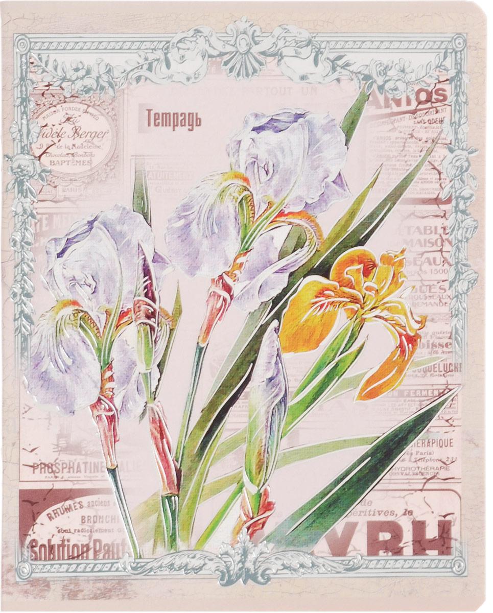Феникс+ Тетрадь Красивые цветы Ирисы 48 листов в клетку29569_ирисыТетрадь Феникс+ Красивые цветы имеет обложку формата А5+, выполненную из мелованного картона.Благодаря скругленным краям исключаются заломы уголков.Внутренний блок тетради, соединенный двумя металлическими скрепками, состоит из 48 листов качественной белой бумаги. Стандартная линовка в клетку голубого цвета дополнена полями.