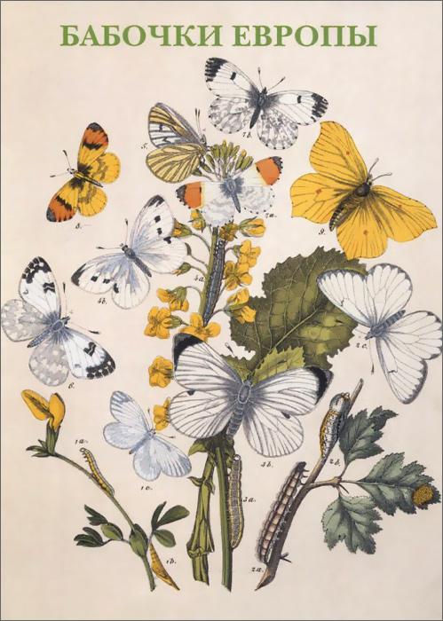 Бабочки Европы. Открытки происходит внимательно рассматривая
