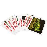 Купить Вундеркинд с пеленок Обучающие карточки Экзотические животные