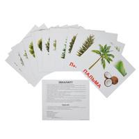 Купить Вундеркинд с пеленок Обучающие карточки Деревья