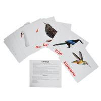 Купить Вундеркинд с пеленок Обучающие карточки Птицы