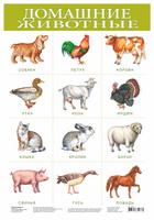 Купить Дрофа-Медиа Обучающий плакат Домашние животные