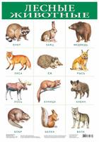 Купить Дрофа-Медиа Обучающий плакат Лесные животные