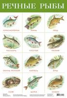 Купить Дрофа-Медиа Обучающий плакат Речные рыбы
