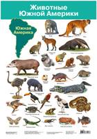 Купить Дрофа-Медиа Обучающий плакат Животные Южной Америки