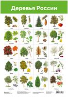 Купить Дрофа-Медиа Обучающий плакат Деревья России