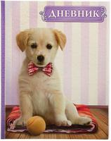 Купить Calligrata Дневник школьный Собака и мяч, Дневники