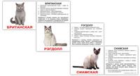 Купить Вундеркинд с пеленок Обучающие карточки Мини 20 Породы кошек, Обучение и развитие