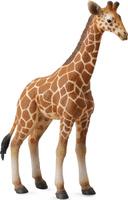 Купить Collecta Фигурка Жеребенок сетчатого жирафа, Фигурки