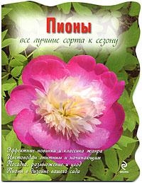 Пионы, Рубинина А.Е.