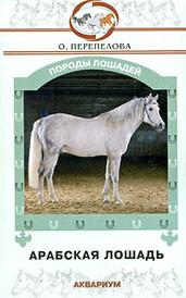 Арабская лошадь, О. Перепелова