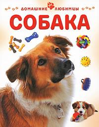 Собака, Мэтью Рейнер