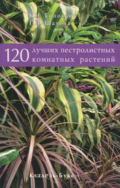 120 лучших пестролистных комнатных растений,