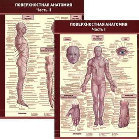 Поверхностная анатомия. В 2 частях. Плакат,