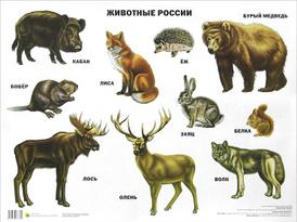 Животные России. Плакат,