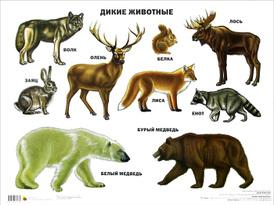 Дикие животные. Плакат,