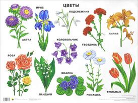 Цветы. Плакат,