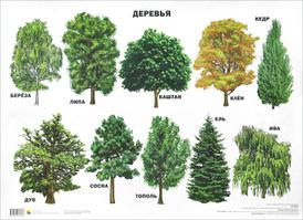Деревья. Плакат,