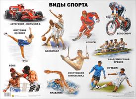 Виды спорта. Плакат,