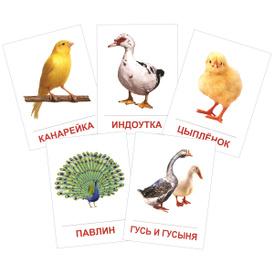 Птицы домашние и декоративные (набор из 16 карточек),